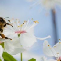 API-Smart, un programme de sensibilisation à l'environnement